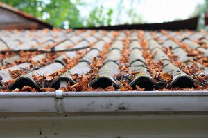 Fall Leaves on a Roof, Indicating it Is Time for a Seasonal Roof Inspection.