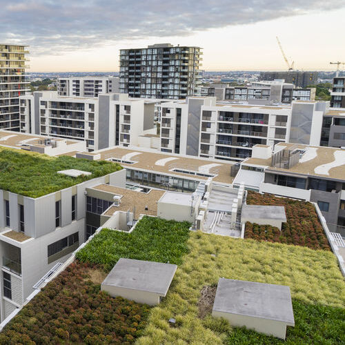 View of green roof on modern buildings and other residential buildings in Sydney, Australia during sunrise