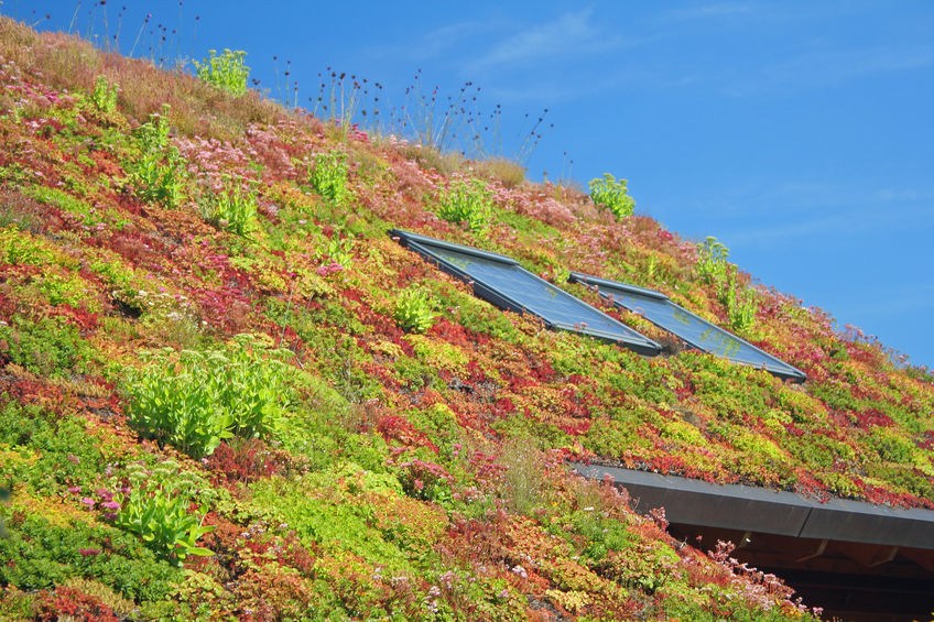 green roof of a home